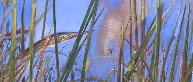 Contact Adelaide Tyrol, Vermont naturalist artist